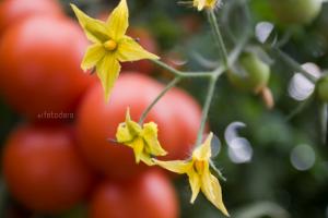 Cultivos de Invernadero